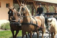 Horse carriage in Bikacs, Hungary - active relaxing in Hotel Zichy Park
